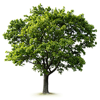 Tree Image